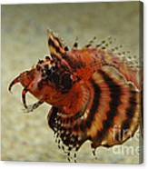 Fu Manchu Lionfish Canvas Print