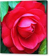 Fuchsia Camellia In Pastel Canvas Print