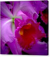Fuchsia Cattleya Orchid Squared Canvas Print