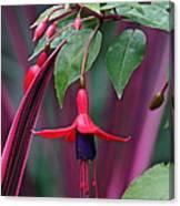 Fuchsia Delight Canvas Print