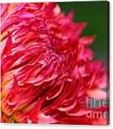 Fuchsia Flames Canvas Print