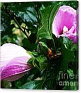 Fuchsia Flowers Laced In Droplets Canvas Print