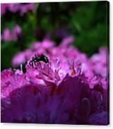 Fuchsia Sweetness Canvas Print