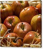 Fuji Apples Canvas Print