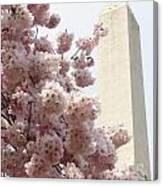 Full Bloom In Dc Canvas Print