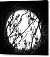 Full Moon And Poplar Branches Canvas Print