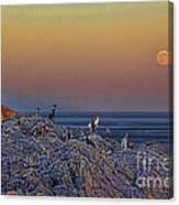 Full Moon Gathering Of Capricorn Canvas Print