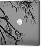 Full Moon Old Snag Canvas Print
