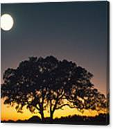 Full Moon Over Silhouetted Tree Canvas Print
