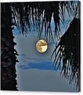 Full Moon Palm Tree 5 9/17 Canvas Print