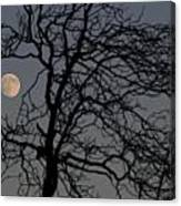 Full Moon Through A Tree Still Standing After A Fire Canvas Print