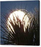 Full Moon Through The Palms Canvas Print