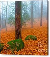 Full Of Autumn Canvas Print