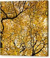Full Yellow Canvas Print