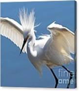 Fun Snowy Egret Canvas Print