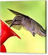 Fun Summer Hummingbird Canvas Print