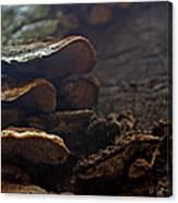 Fungus 11 Canvas Print