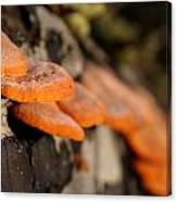 Fungus 2 Canvas Print