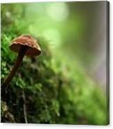 Fungus 4 Canvas Print
