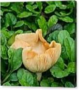 Fungus Among The Ajuga Canvas Print