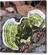 Fungus Number One Canvas Print