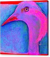 Funky Demoiselle Crane Bird Art Prints Canvas Print