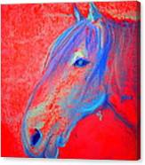 Funky Handsome Horse Blue Canvas Print