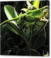 Fractal Nature South Carolina Green Lizard Canvas Print
