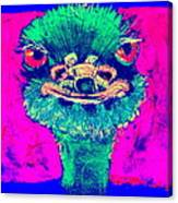 Funky Ostrich Cool Dude Art Prints Canvas Print