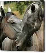 Funny Horses Canvas Print
