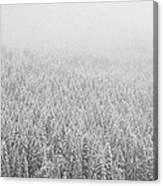 Fur Trees In The Snow Canvas Print