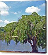 Furman Tree And Tower Canvas Print