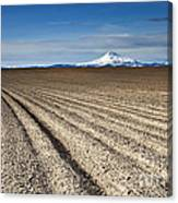 Furrows Canvas Print