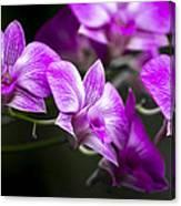Fushia Orchid Canvas Print