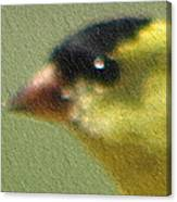 Fuzzy Gold Finch Canvas Print