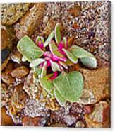 Fuzzy Plant On Blue Mesa Trail In Petrified Forest National Park-arizona  Canvas Print