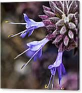 Fuzzy Purple Detail 1 Canvas Print