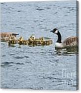 Gaggle Of Geese Canvas Print