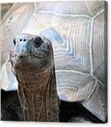 Galapagos Tortoise 1 Canvas Print