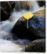 Galena Creek Trail  Canvas Print