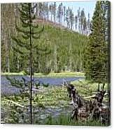 Gallatin River Yellowstone  Canvas Print