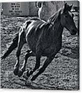 Gallop 2 Canvas Print