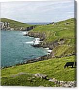 Atlantic Coast Of Ireland Canvas Print
