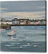Galway Swans Galway Ireland Canvas Print
