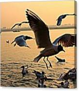 Ganges River Gulls Canvas Print