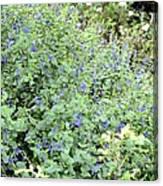 Garden Blues Canvas Print