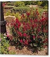 Garden Bush At Woodward Park 2f Canvas Print