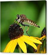 Garden Fly Canvas Print