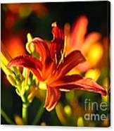 Garden Glow Canvas Print