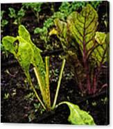 Garden Greens Canvas Print
